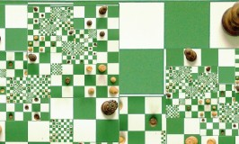 The Chessboard: Basic Position